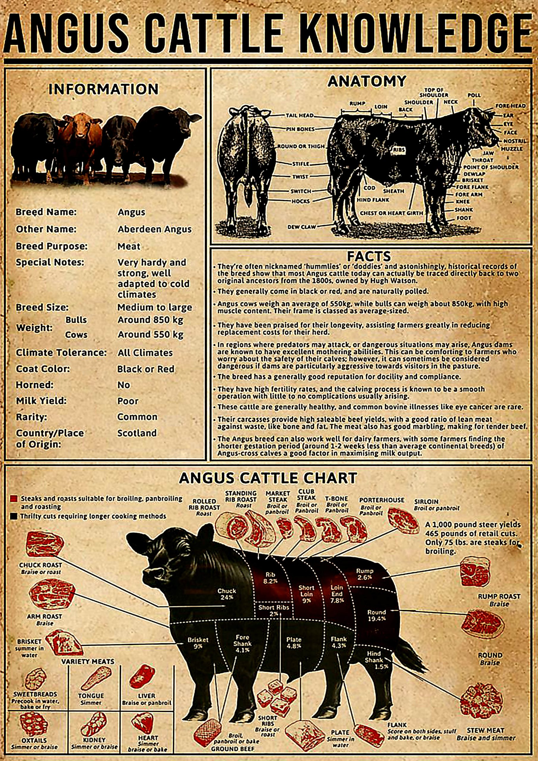 vintage angus cattle knowledge poster 1