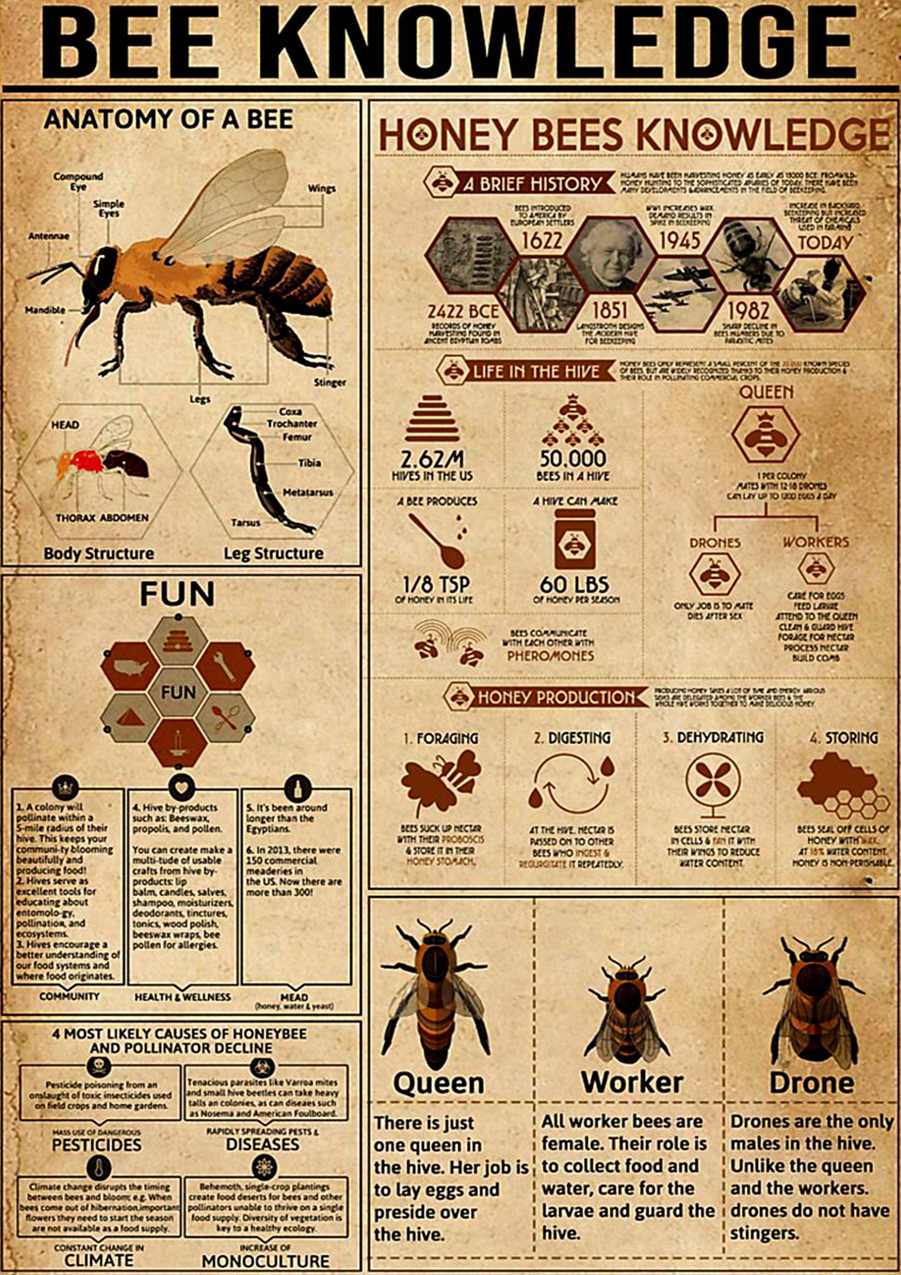 vintage bee knowledge poster 1