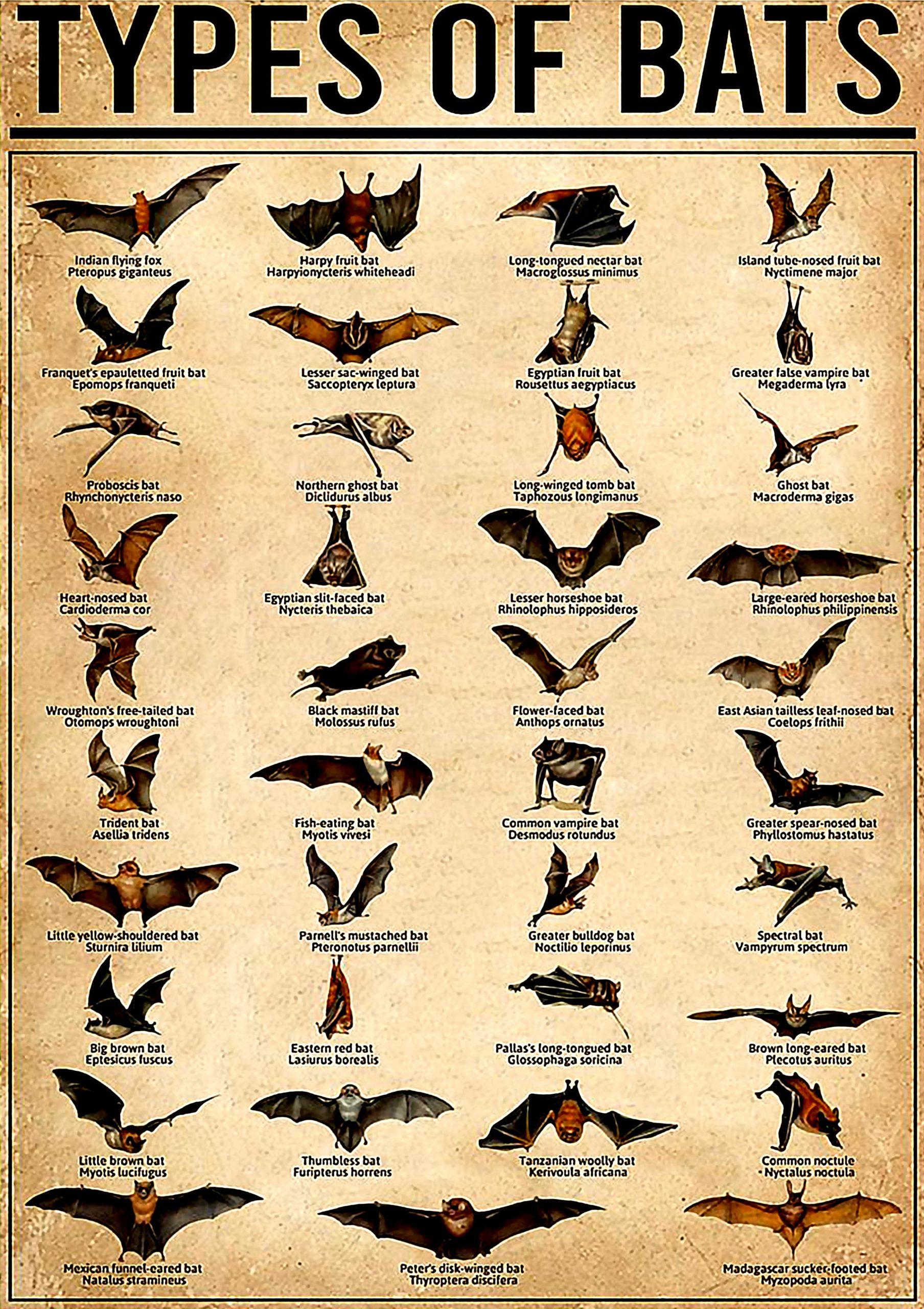 vintage types of bats poster 1